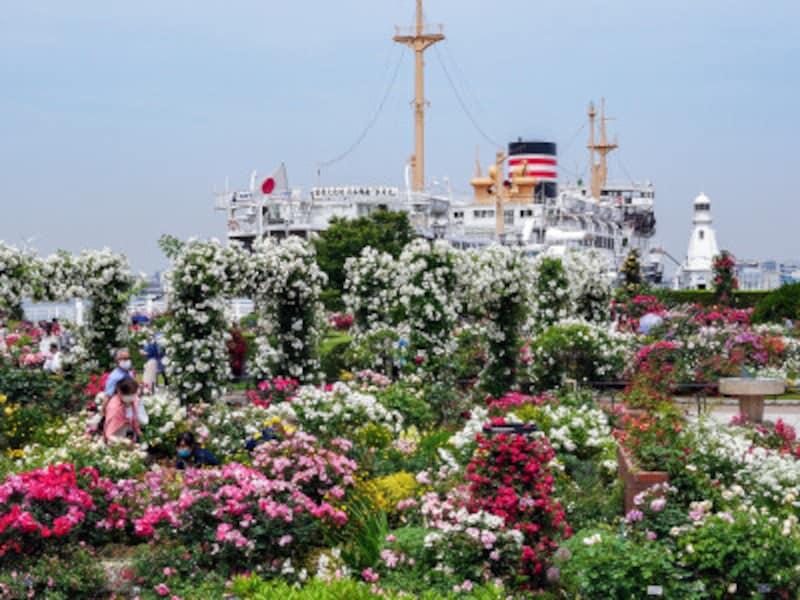 山下公園前の沈床花壇「未来のローズガーデン」。日本郵船氷川丸をバックに(2021年5月14日撮影)