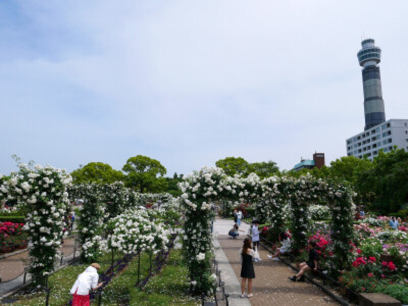 山下公園の向かい側にある横浜マリンタワーは2022年3月31日まで改修工事のため休館(2021年5月14日撮影)