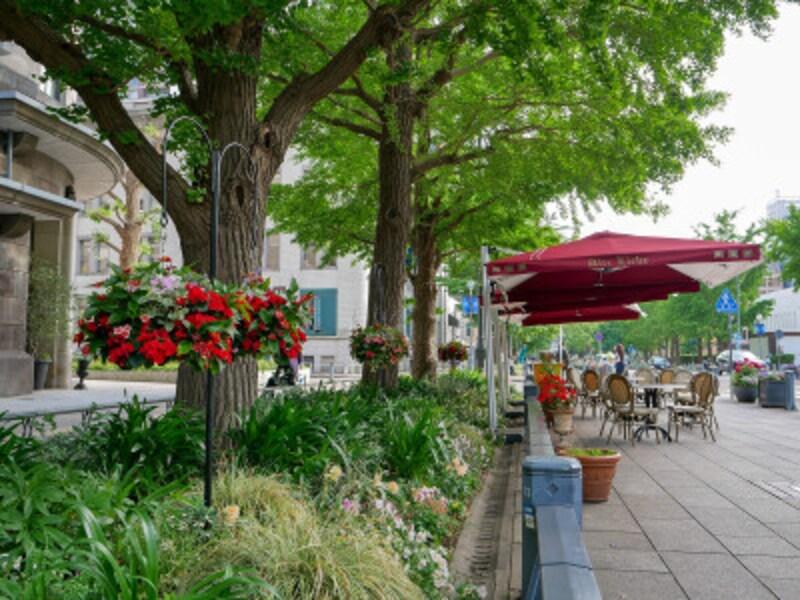 2021年6月13日まで「ガーデンネックレス横浜2021」が開催されており、日本大通りでもバラが楽しめます(2021年5月14日撮影)