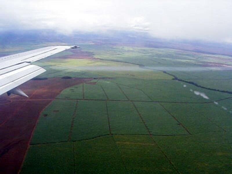 パイナップル畑が広がるマウイ島