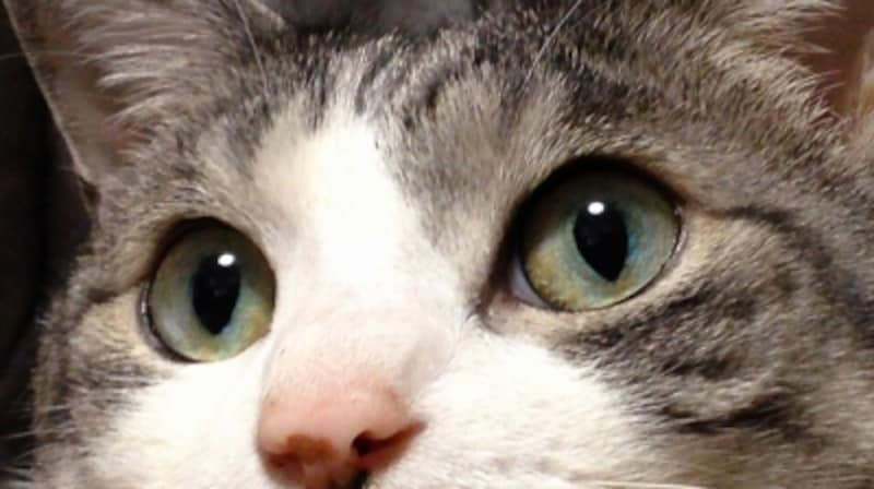 ねこの瞳は、光りの具合によって変わります
