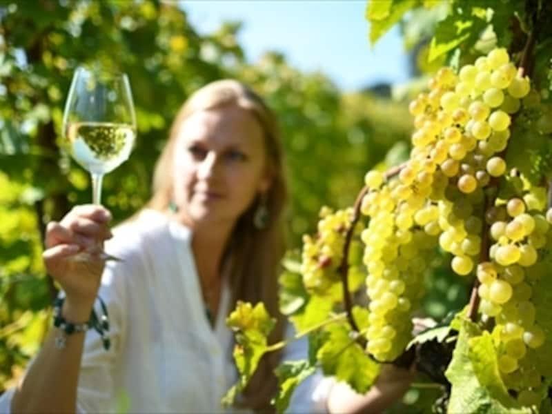 スイスワインと葡萄畑