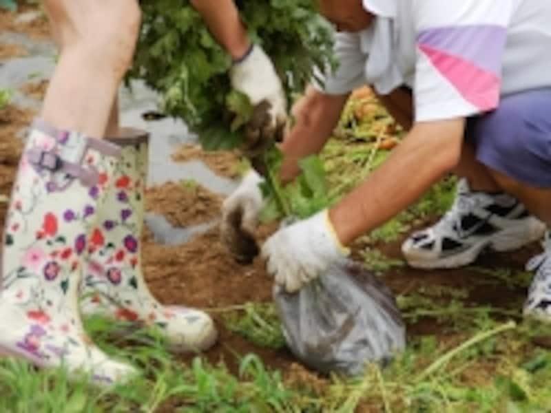 田舎暮らしでの一番人気は家庭菜園