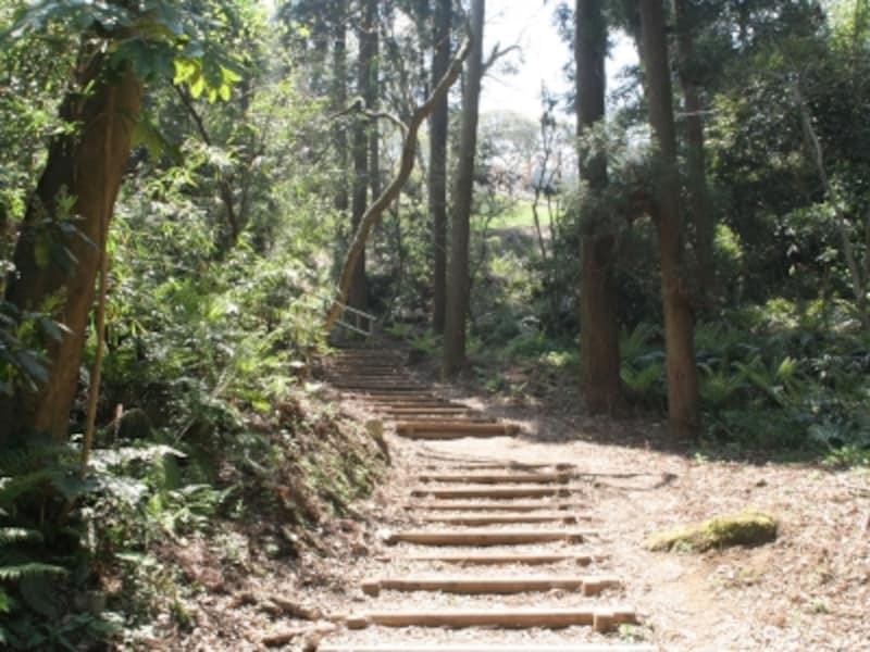 杉木立の「森のさんぽみち」