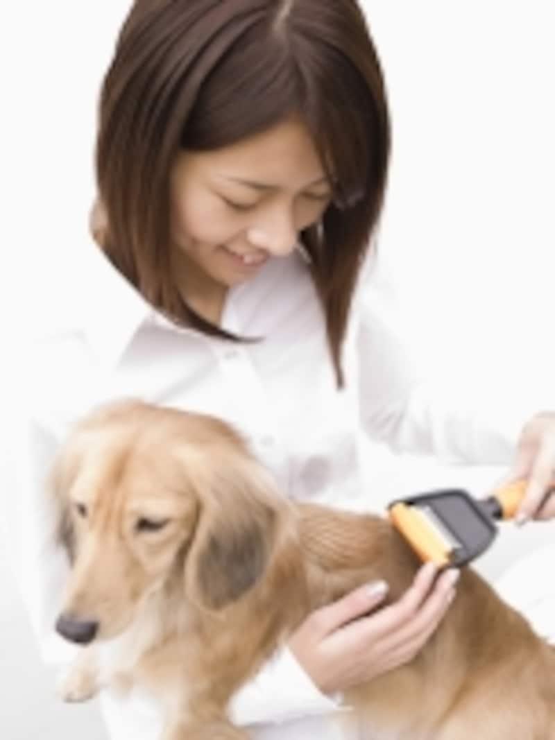 愛犬のグルーミング