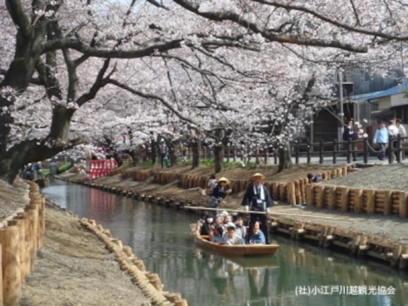 新河岸川桜まつりの時に出される和舟。桜のトンネルをくぐり抜けます。