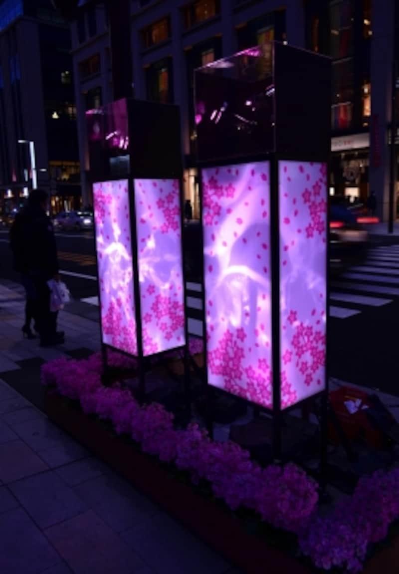 桜のモチーフが描かれた行燈