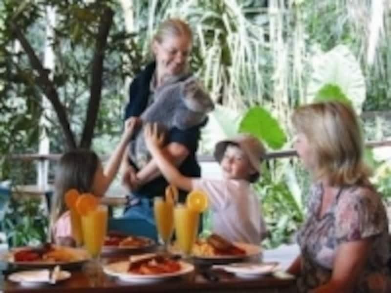 コアラと朝食