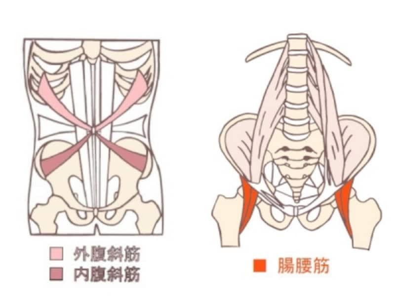 腹斜筋と腸腰筋の走行