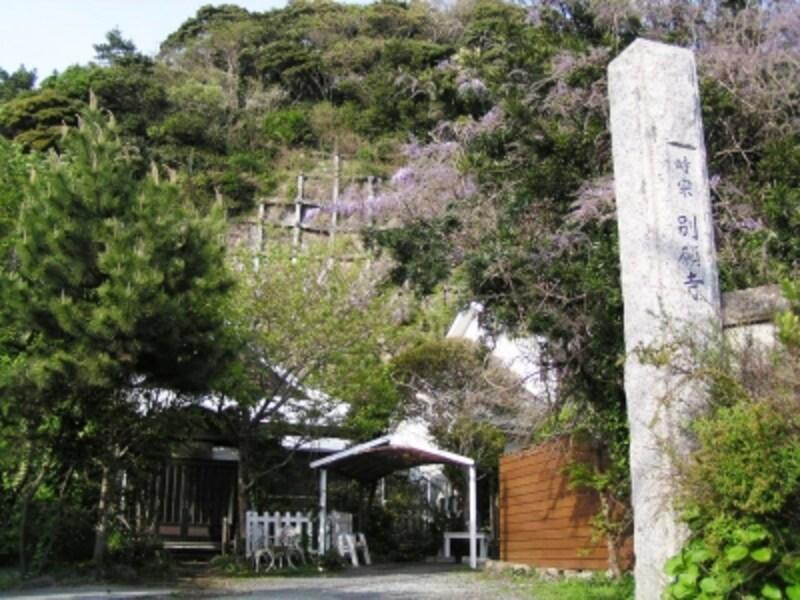 フジの花咲く別願寺