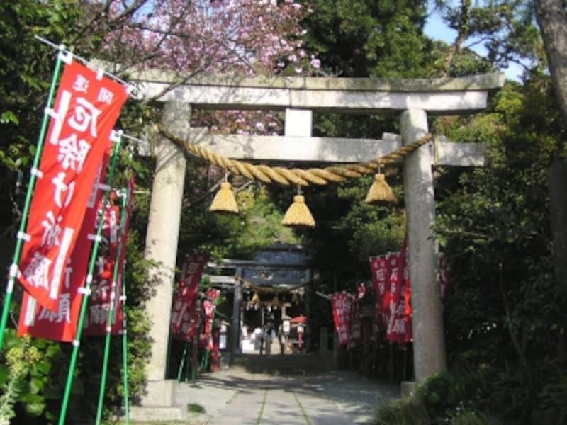 八重桜咲く八雲神社