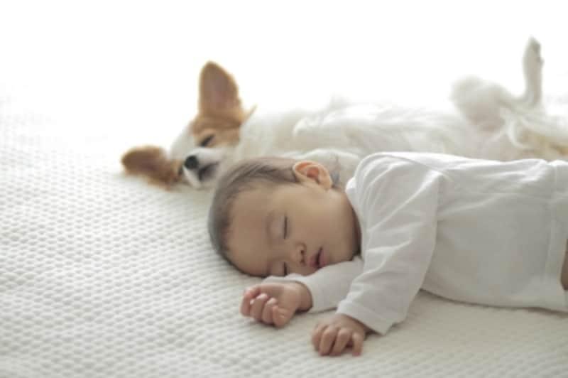 眠っている赤ちゃんと犬