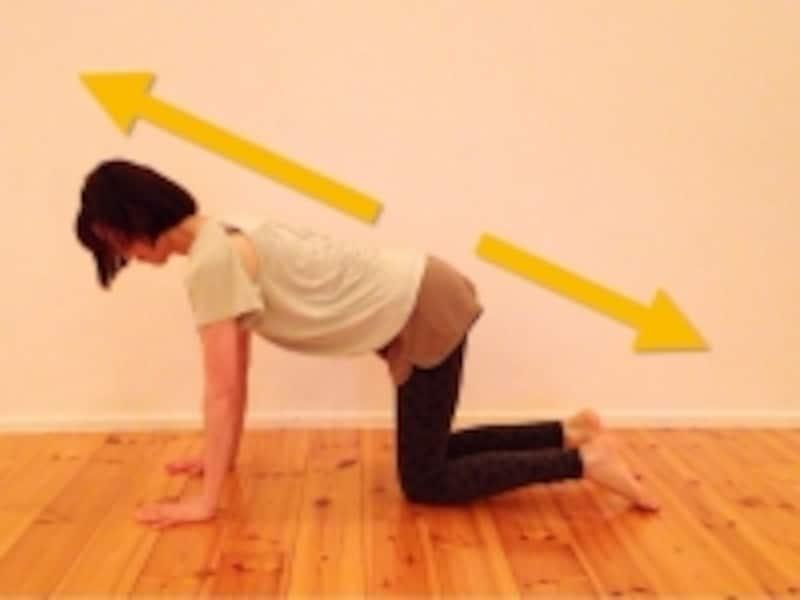 スタート姿勢の手足の位置を整えて