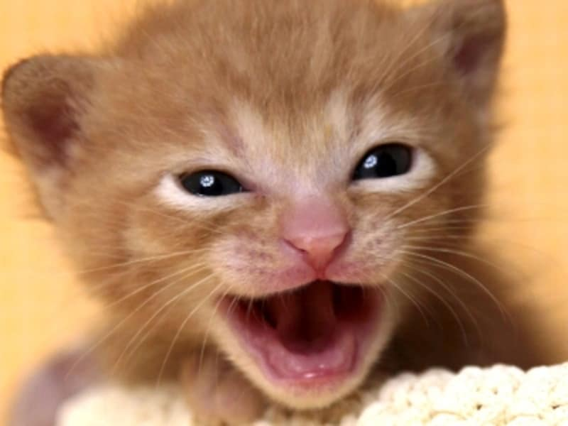 鳴く猫と鳴かない猫