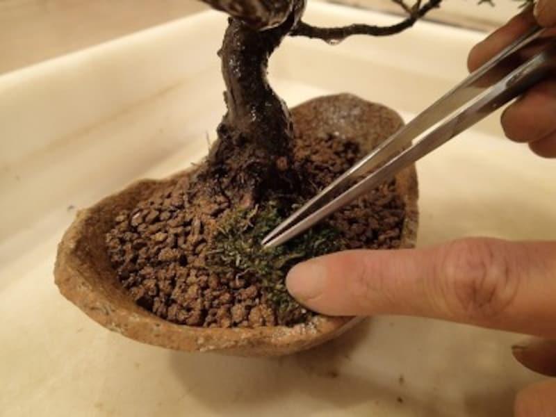苔をはって仕上げます