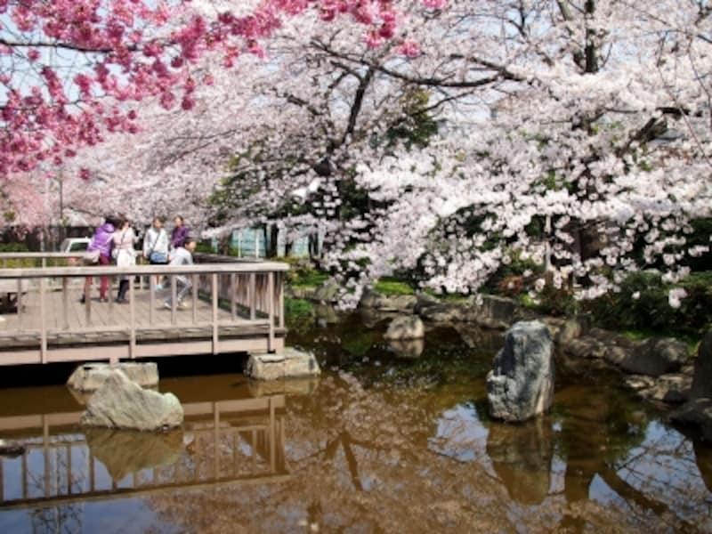 桜の周囲もいろいろあって楽しい