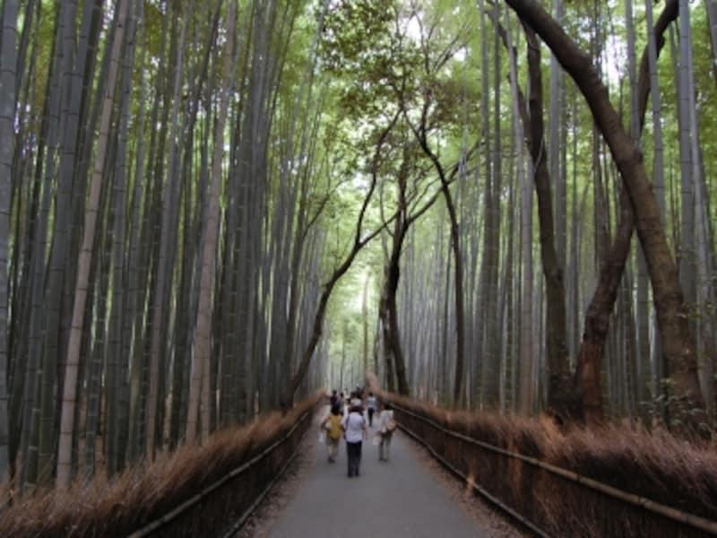 「一人旅」の旅行先、京都がダントツ人気!