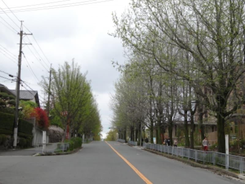 「大阪まちなみ百選」に選ばれている三色彩道