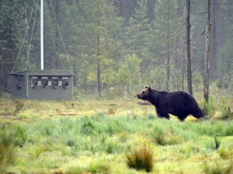 シェルターとクマ