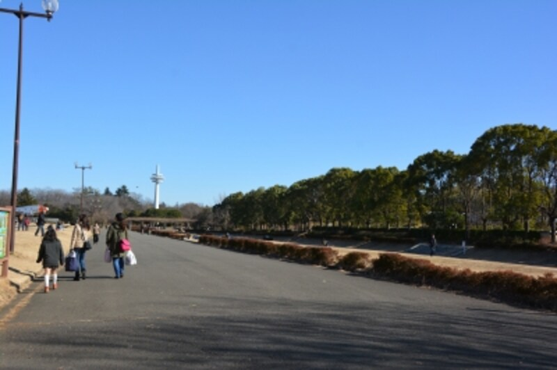 放送塔に向かって滑走路跡地に一直線に並ぶ沈床茶園の花壇