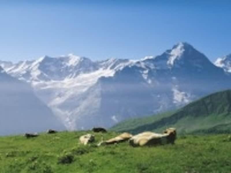 牛と一緒に写真に写るのもハイキングの楽しみのひとつ