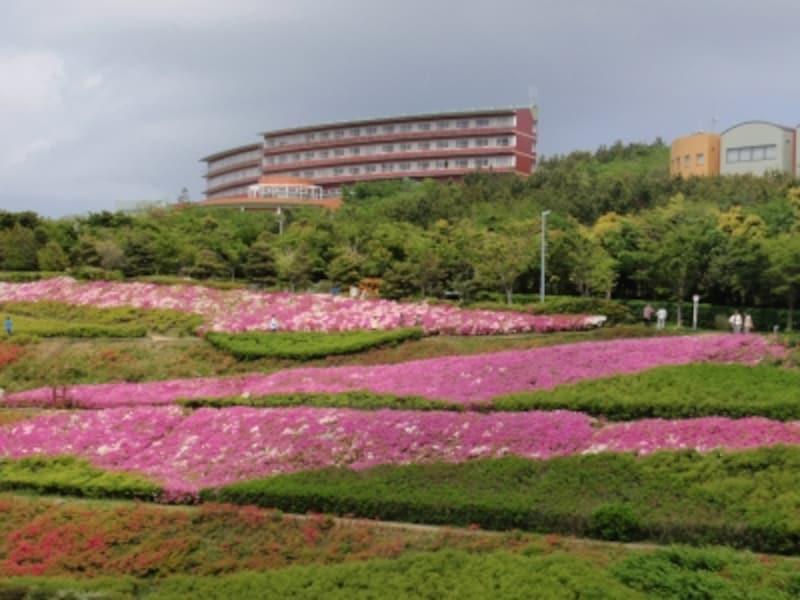 【AFTER】ツツジが咲くとundefined写真提供:よこすかシティガイド協会
