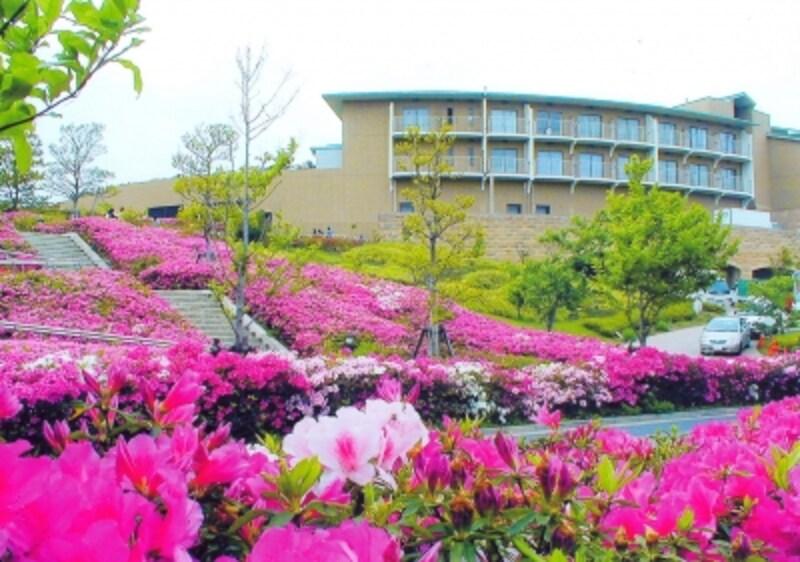 10万本のツツジが咲く、湘南国際村undefined写真提供:湘南国際村センター