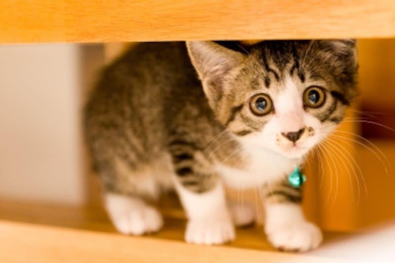猫がストレスを感じるのはどんなとき?