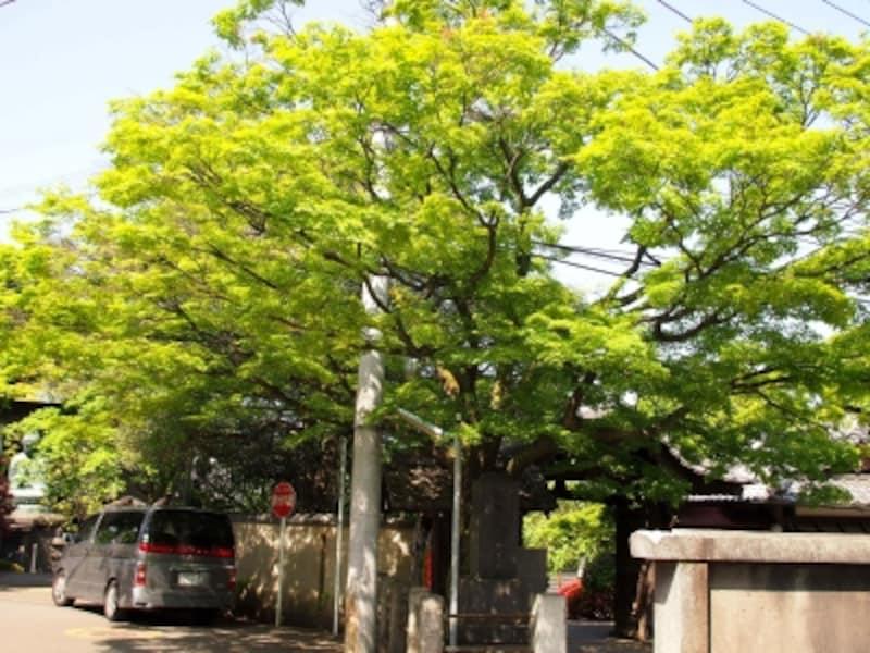 かつて谷中霊園一帯が天王寺の敷地だった