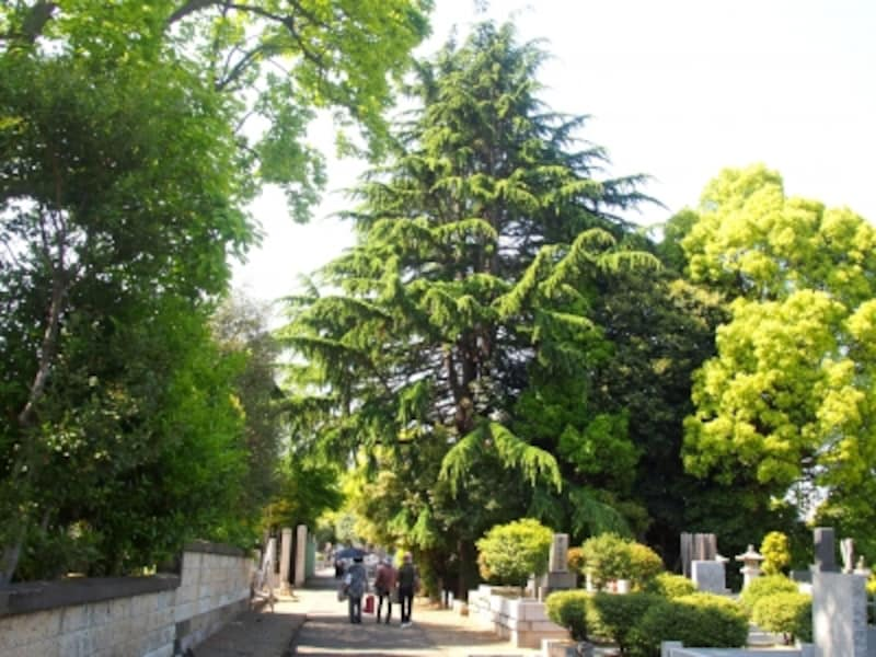 天気のいい日、墓所を歩くには日傘があったほうがいいかも