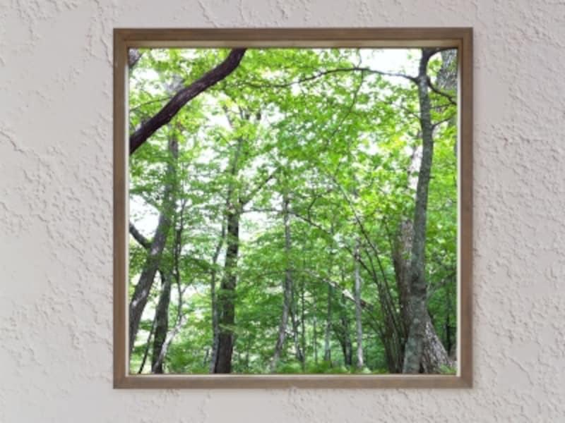 木漏れ日の窓