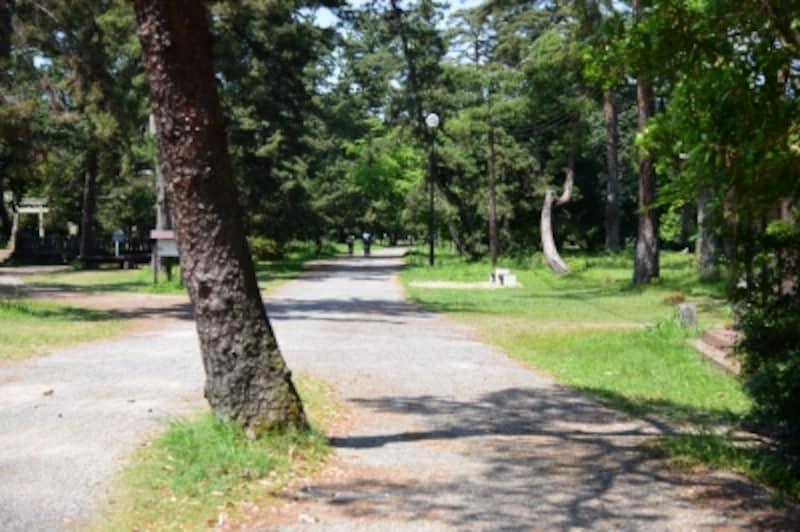 道の両側に続く松林