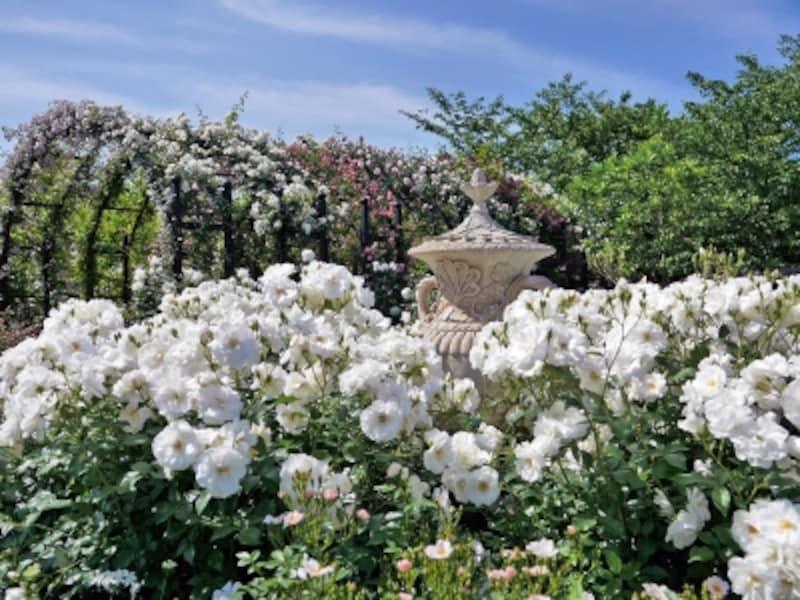 白でまとめられた「Rose&PerennialGarden~ローズ&ペレニアルガーデン」(2018年5月11日撮影)