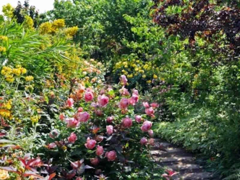 広い芝生をぐるりと囲む「Rose&ShrubGarden~ローズ&シュラブガーデン」(2018年5月11日撮影)