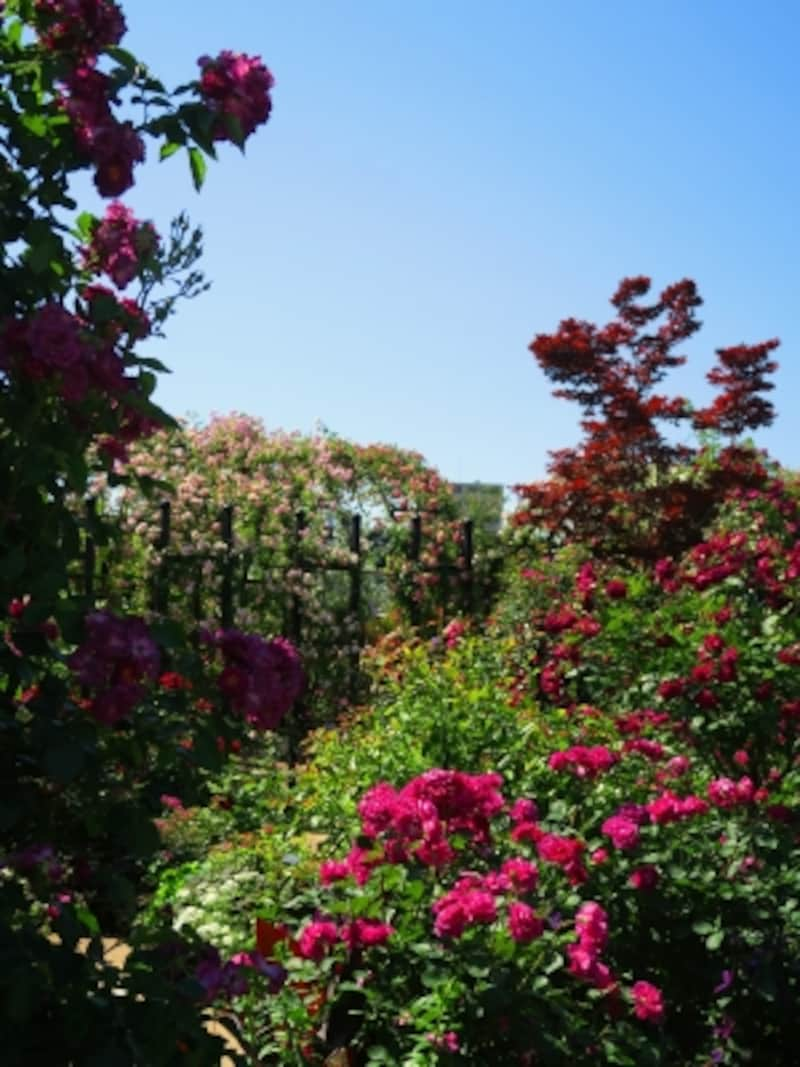 シックな印象の「Rose&ClematisGarden~ローズ&クレマチスガーデン」