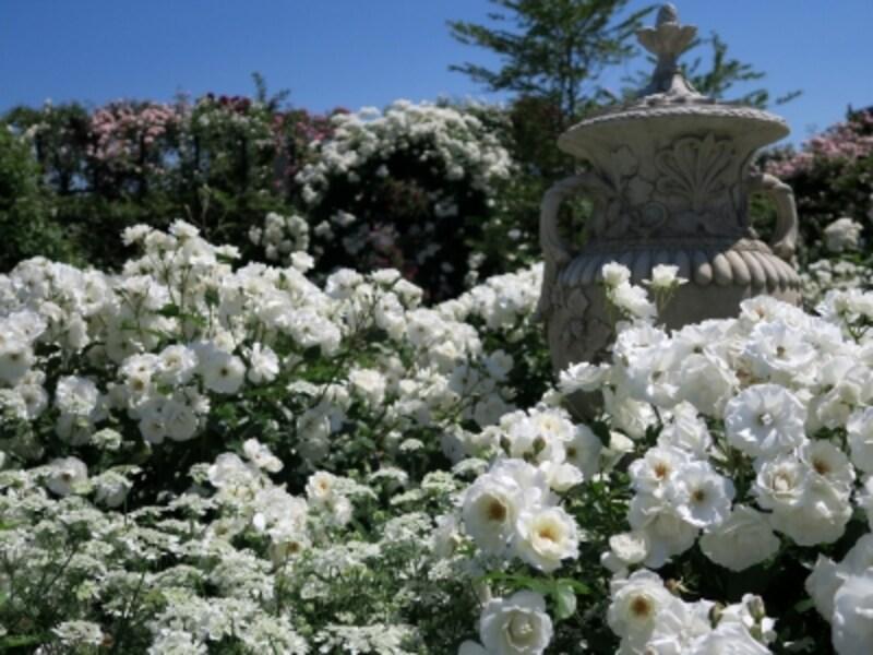 白でまとめられた「Rose&PerennialGarden~ローズ&ペレニアルガーデン」