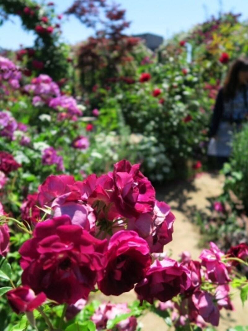アンティークな印象の「Rose&GrassGarden~ローズ&グラスガーデン」
