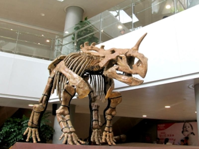 シノケラトプス