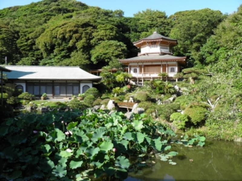 光明寺の池