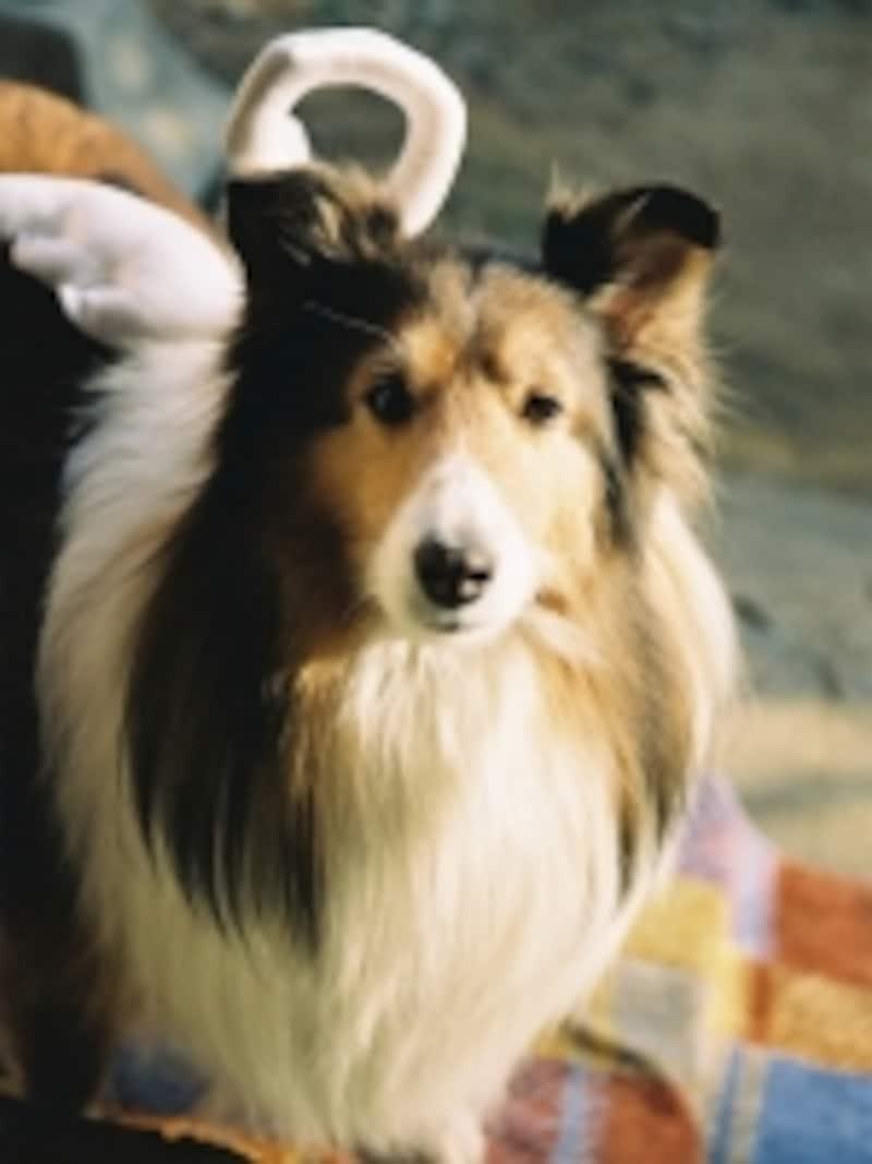 ほんとうの天使となった愛犬
