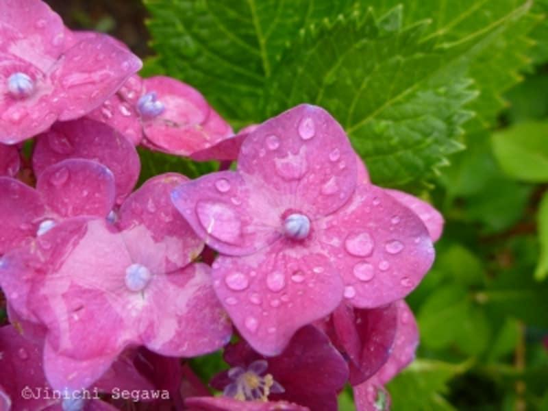 梅雨の写真