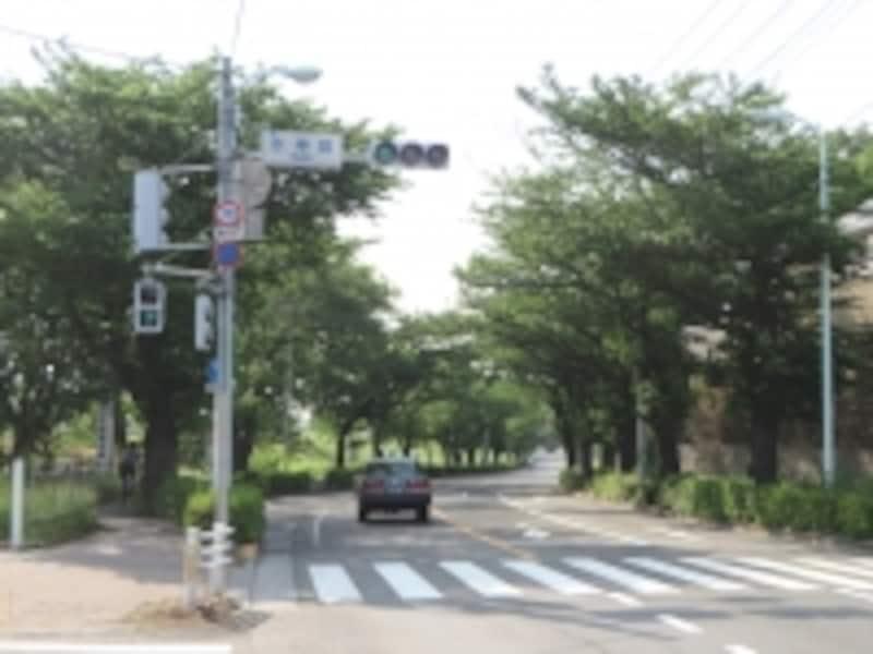 並木のある通り