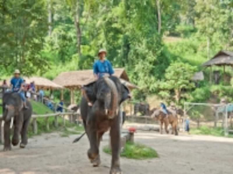 メーサーエレファントキャンプの象たち