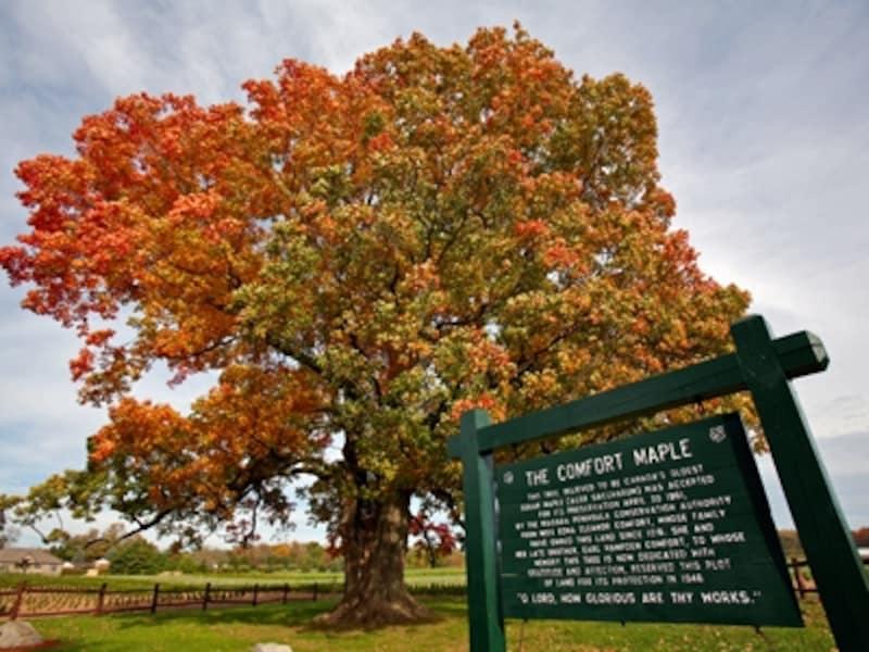 ナイアガラの滝は、秋の紅葉の名所としても知られています。undefined(C)TourismOntario