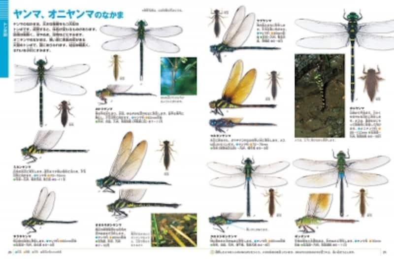 『昆虫』新版DVD付(小学館の図鑑NEO)