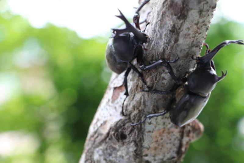 慣れてみると、意外な美しさに驚かされる虫の世界を昆虫図鑑や絵本で深めてみては?