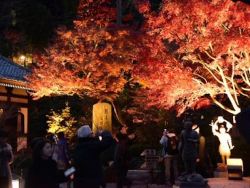 長谷寺の紅葉ライトアップ(2016年撮影)