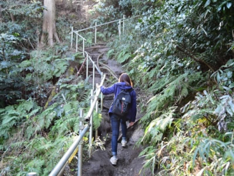 佐助稲荷神社裏手からハイキングコースへの登り坂。ここは、ちょっと道が険し目