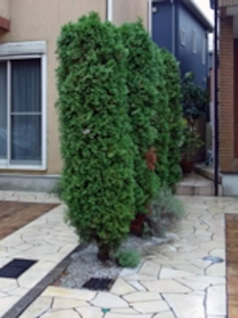隣地との間の植栽