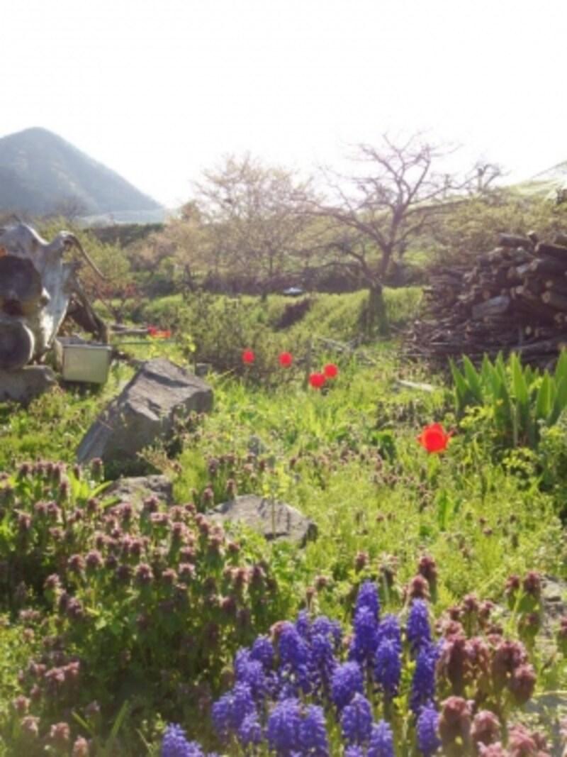緑と花に癒されます(写真提供:創作農家こすもす)
